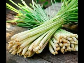 prepare lemongrass  cooking youtube