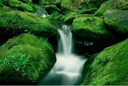 Cool Forest Wallpapers Nature Super Natural Supernatural