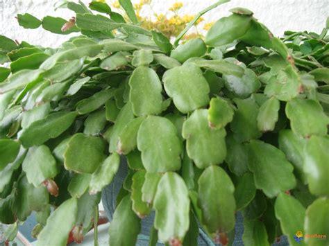plante grasse fleur plante grasse a fleur d int 233 rieur euroseconde