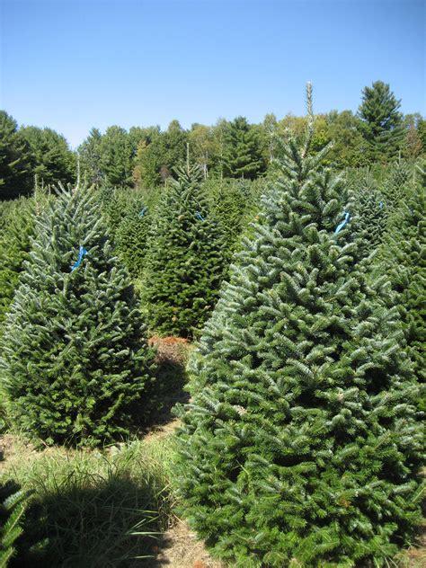 best 28 maine christmas tree farms shopper s diary a
