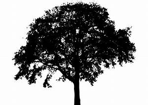 Tree Silhouette | Free Stock Photo | Illustration of a ...
