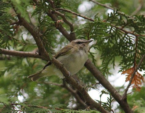 small backyard bird flickr photo sharing