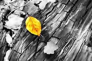 Herbst Schwarz Weiß : herbstlaub in schwarz weiss foto bild jahreszeiten herbst landschaft bilder auf fotocommunity ~ Orissabook.com Haus und Dekorationen
