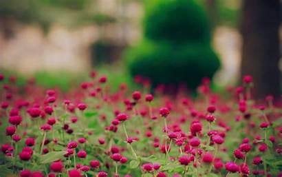 Desktop Spring Flowers Magenta Nature Sat Landscape