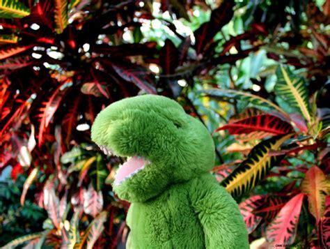 tropical plants list pin tropical rainforest animals plants axsoriscom on pinterest