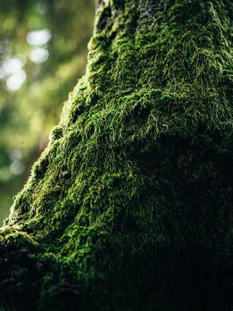green moss  tilt photography  stock photo