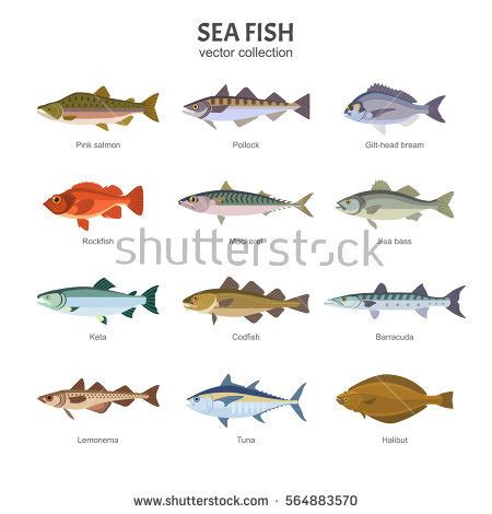 saltwater fish stock images royalty  images vectors