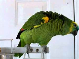 The BEST You-Tube Parrot on the Planet! Beach Pros Realty ...