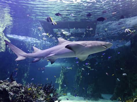 sea sydney aquarium sydney things to do