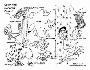 Desert Animals Coloring Page Coloring Pages Of Different Animals In Animal Coloring Pages Style