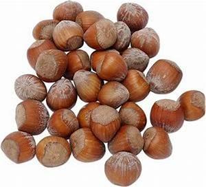 Comment Faire Germer Une Graine : comment faire pousser un arbre noisette partir d 39 une ~ Melissatoandfro.com Idées de Décoration