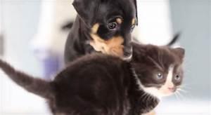 Gattini e cuccioli: il primo incontro [video] Petpassion Blog