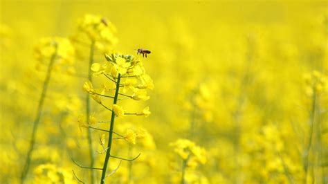 complete yellow flowers wallpapers hd wallpapers id