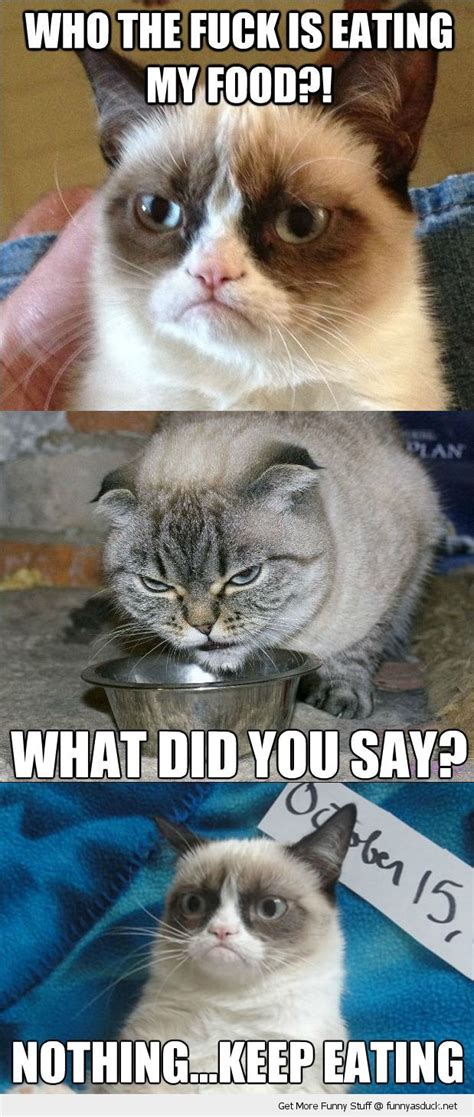 Food Cat Meme - grumpy angry cat eating my food lolcat animals funny pics pictures pic picture image photo