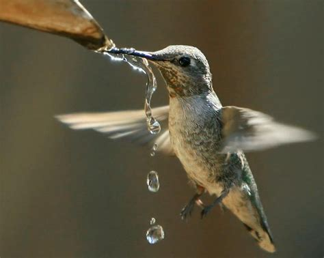 22 best drinking water for animals images on pinterest