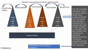 Study The Effect Of Substrate Concentration On Salivary Amylase Activity