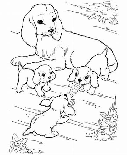Coloring Dogs Puppies Pages Dog Puppy Sheets