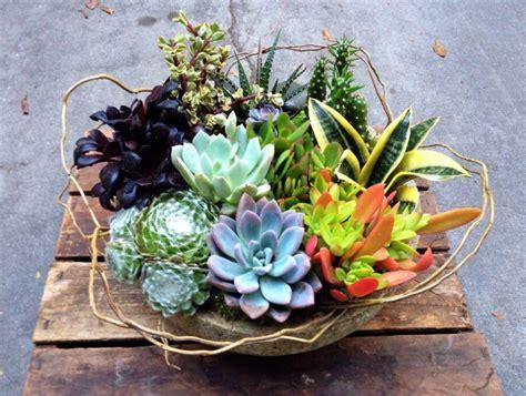 Succulent Gardens » Pasadena Florist