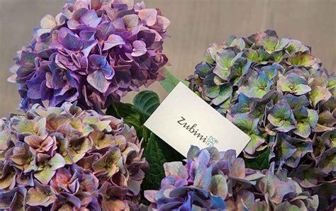 fiori fianco fiori recisi zubini