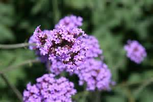 Purple Flowers and Names