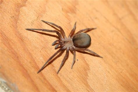 ragno in casa ragno di casa