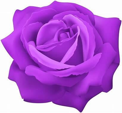 Purple Rose Clipart Clip Flower Clipground
