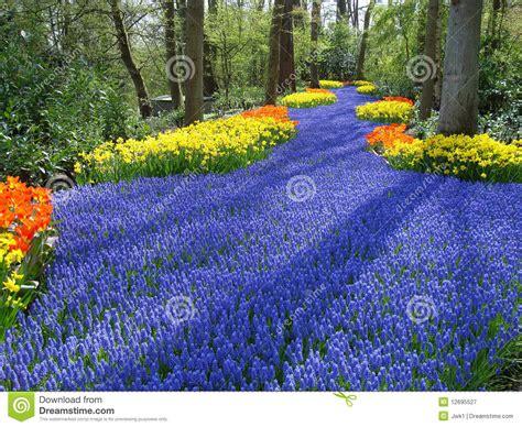 Lane Of Flowers In Dutch Spring Garden Stock Image