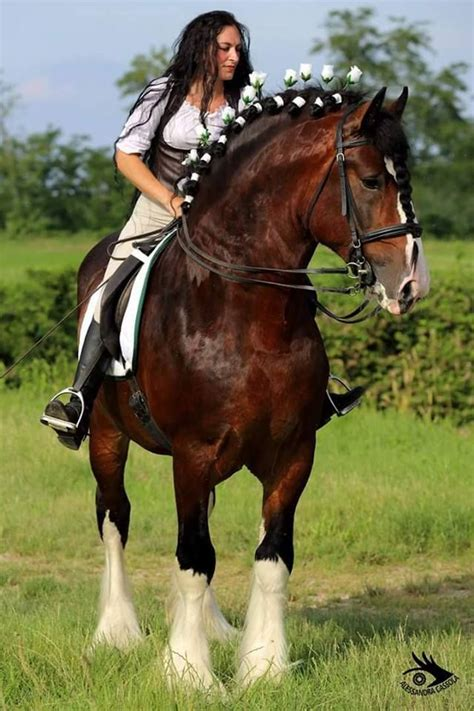 horses shire draft horse stallion woman riding clydesdale gorgeous facts horseback rider cowgirl percheron cow ass