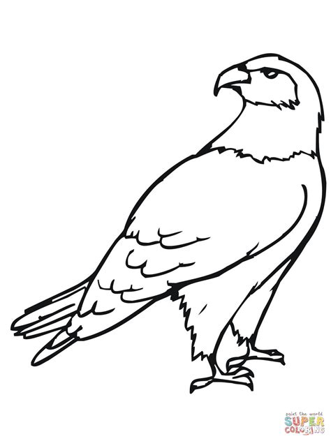 hawk bird coloring page  printable coloring pages