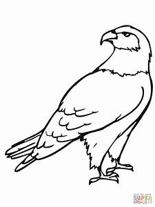 red tailed hawk coloring page - hawk bird coloring page free printable coloring pages