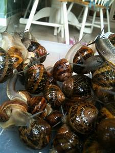A Snails Guide To Snailing  Snailkeeping Co Uk