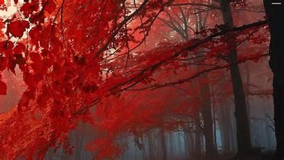 4k Autumn Fall Desktop Wallpapersafari Tablet Mobile