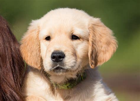 fotos gratis perrito perro mascota joven nariz