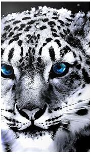 White Tiger Wallpapers HD - Wallpaper Cave