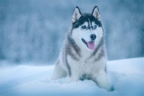 大型犬・超大型犬ってどんな犬種?その魅力や飼育に必要な用品、独特なグッズなどをご紹介!|犬の総合情報サイト ペット