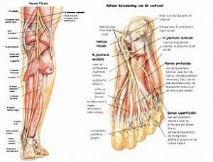 Fysiotherapie Apeldoorn fysiotherapiepraktijk Leeuwis
