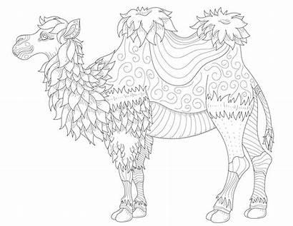 Camel Coloring Fine Line Lines Drawing Camels