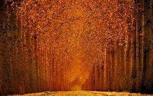 Wallpaper, Autumn, Park, 5k, 4k, Wallpaper, Trees, Leaves