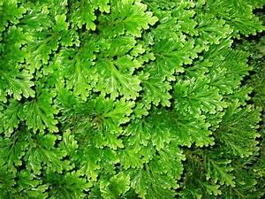 11 Pflanzen Methode : ein beitrag zum impressionismus ii ~ Lizthompson.info Haus und Dekorationen