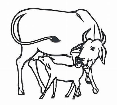 Cow Calf Congress Indian Drawing Svg Inc