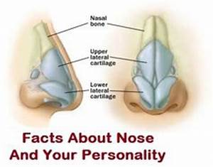 1000+ images about Noses on Pinterest   Face shape chart ...