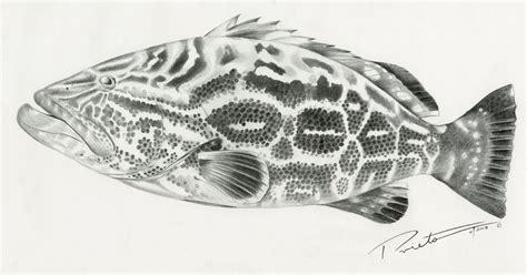grouper drawing prieto drawings pedro tattoos tattoo dove tatting