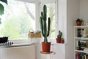 Mes Plantes // Cactus Mango and Salt