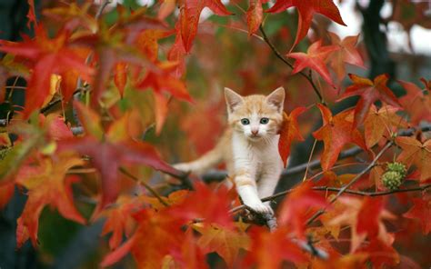 Fall Wallpaper With Animals - 22 animals in leaves that will brighten your autumn