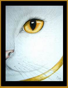 White Cat - Amber Eye 2 - by Cyra R. Cancel from Gallery