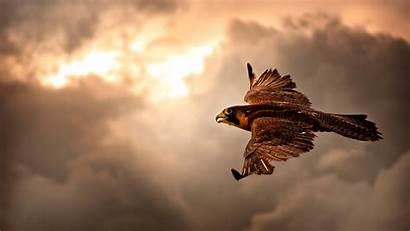 Hawk Flying Sky 4k Wallpapers