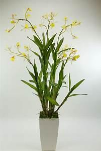 Künstliche Orchideen Im Topf : orchideen arrangement dendrobie 100cm wei creme ar kunstblumen orchidee ebay ~ Watch28wear.com Haus und Dekorationen