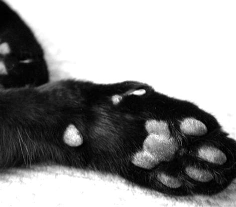 cats paw february 2010 sassi paws by wilson pet designs