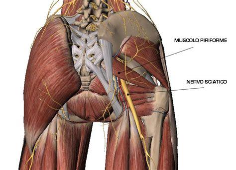 Muscolo Sedere Sciatalgia E Sindrome Piriforme Alessio Personal Trainer