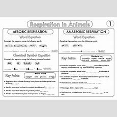 Gcse Worksheet On Respiration By Beckystoke  Teaching Resources Tes